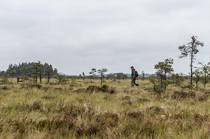 Vandring på Store Mosse nationalpark