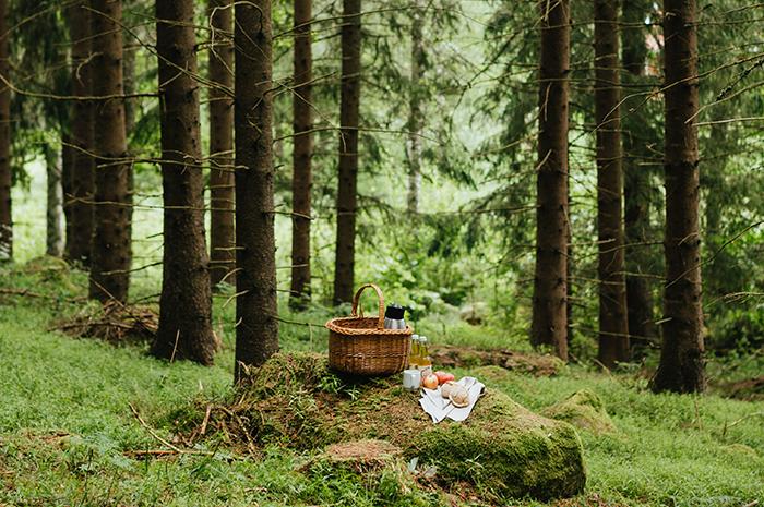 Picknick i Bauerskogen i Småland