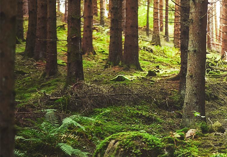 Multiple use of forest skog